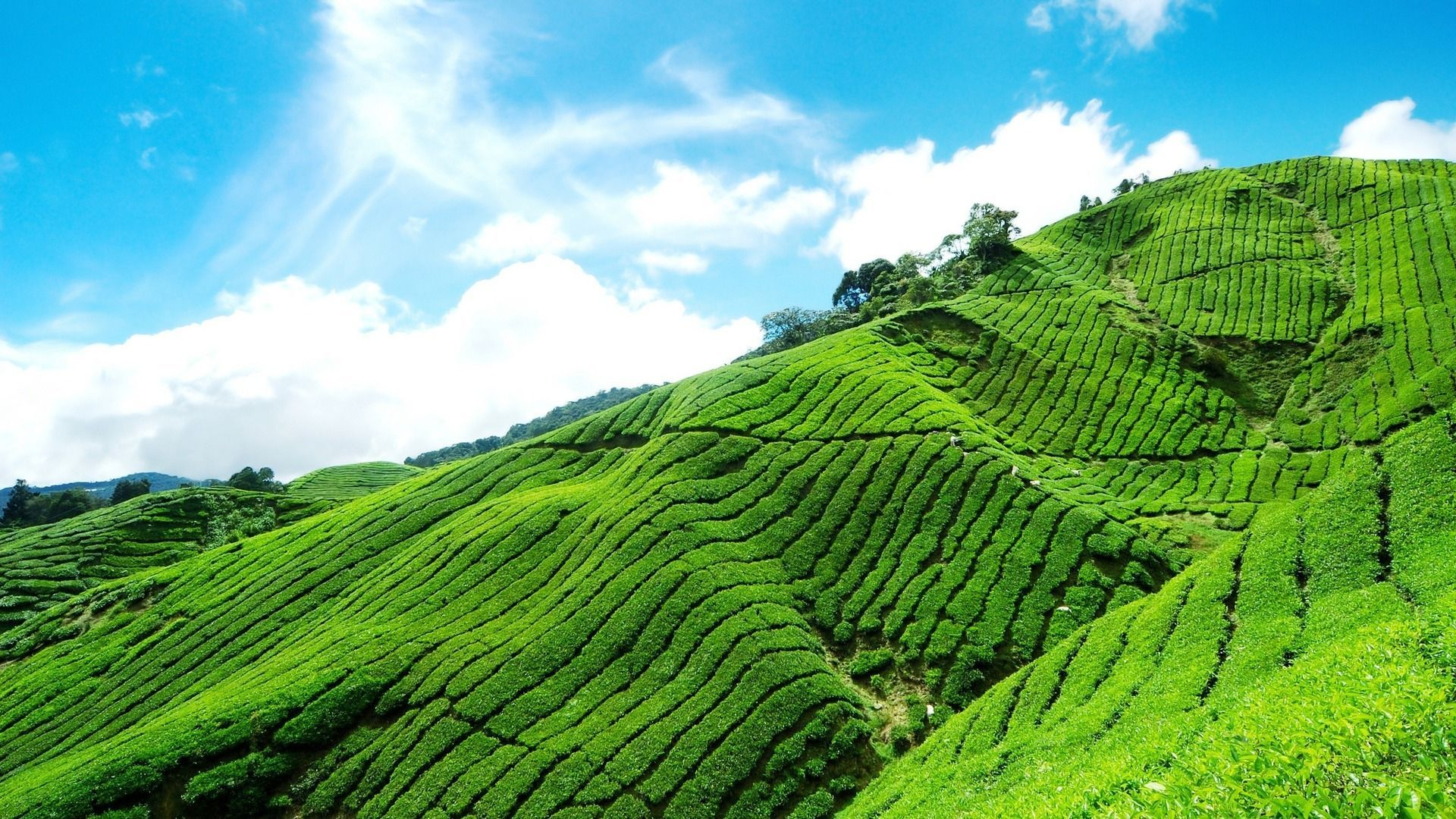 Munnar- ( Idukki)- Kerala- India